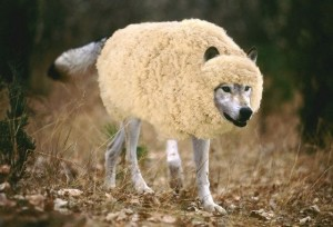 wolf-in-sheeps-clothing 02